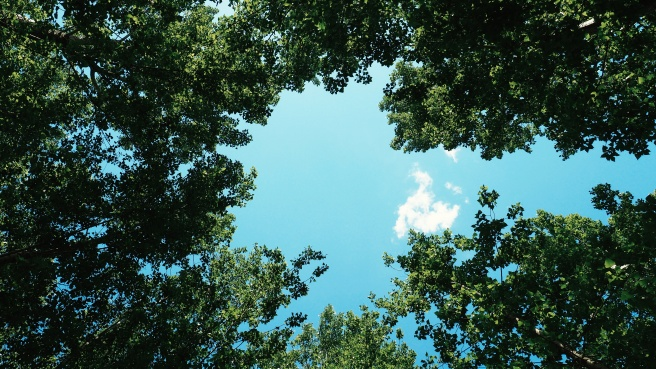 cloud-trees